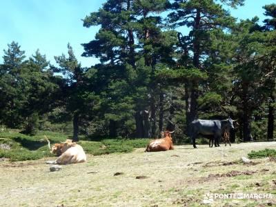 Siete Picos_La Sierra del Dragón; viajes baratos agosto viajes organizados para jovenes